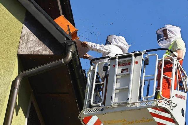 Bienenschwarm ruft Feuerwehr auf den Plan