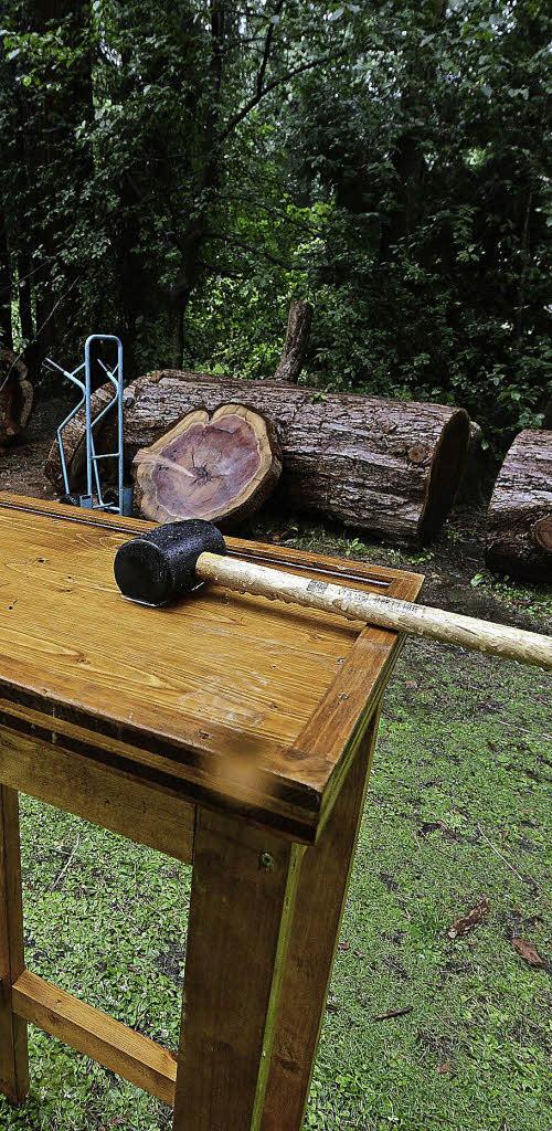 der botanische garten hat am sonntag scheiben des gef llten mammutbaums verkauft f r. Black Bedroom Furniture Sets. Home Design Ideas