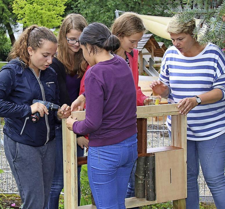 Der Rahmen für das Insektenhotel (link...istkästen ist ebenfalls festgenagelt.   | Foto: fotos: theo weber