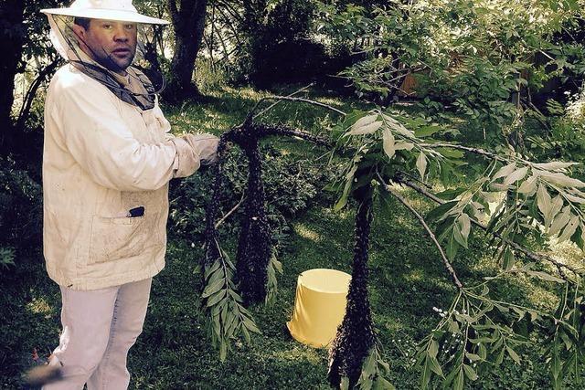 Auch Bienenvölker gehen jetzt auf Reisen