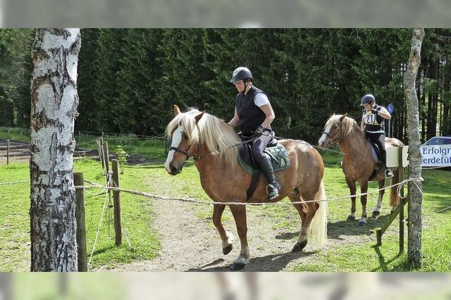 Wenn das Pferd nicht will, geht nichts