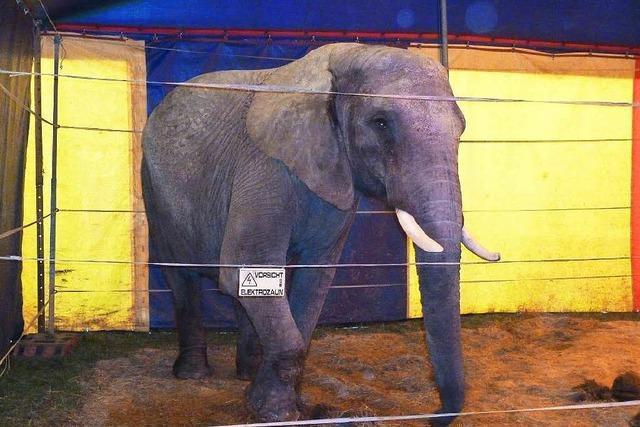 Elefant, der einen Menschen getötet hat, war vor vier Jahren in Lörracher Tankstelle