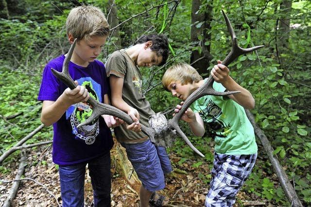 Waldjugendspiele für Grundschüler