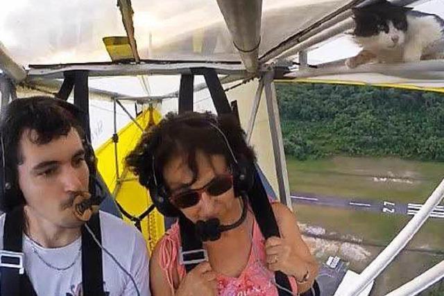 Blinder Passagier: Katze krallt sich an Flugzeugflügel fest