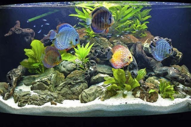 Was Anfänger beim Aquarium beachten müssen