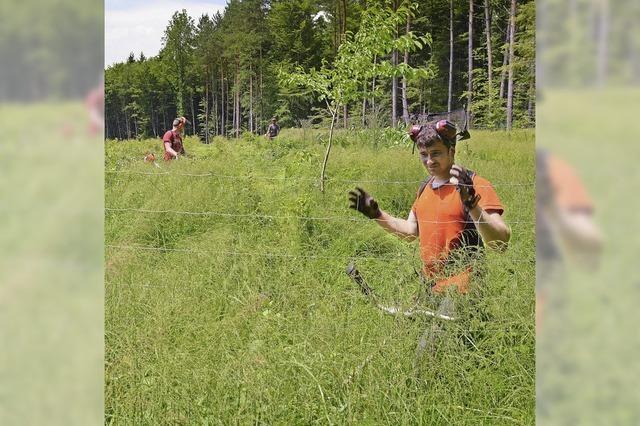Förster leisten Erste Hilfe im Wald