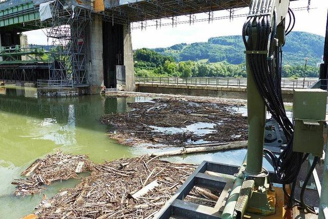Babyleiche im Rhein: Noch keine Spur der Mutter