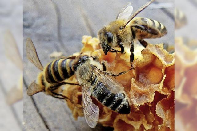 Was Bienen alles können