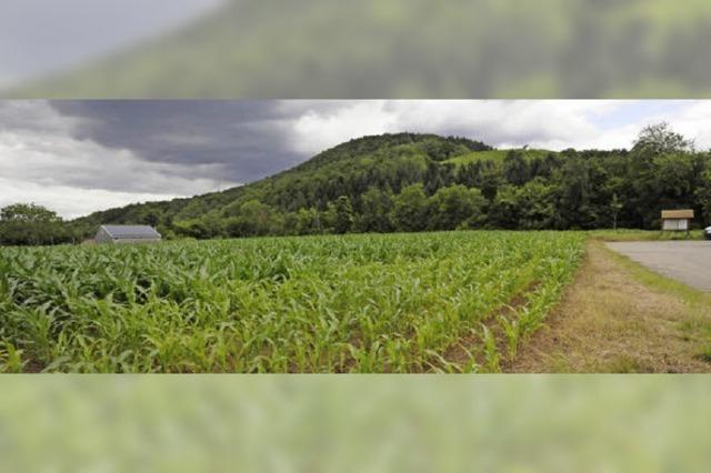 Ein Ort für die Jugend im Maisfeld