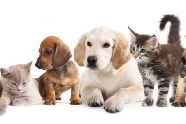 Tierisch Leben: Der Mensch und sein Haustier