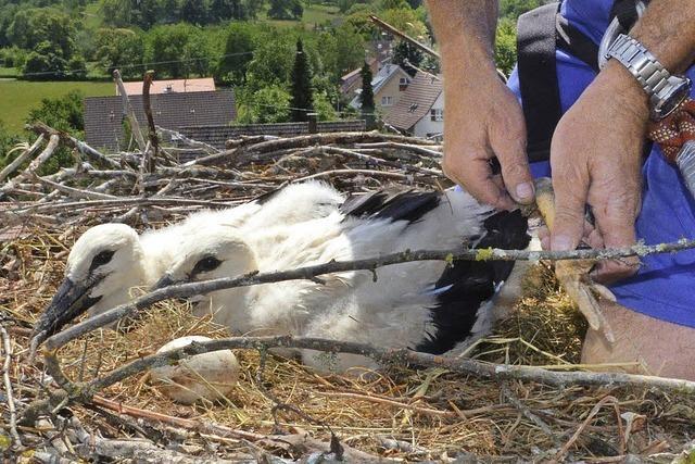 Spannender Tag für Vogel und Mensch