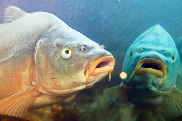 Fische haben unterschiedliche Persönlichkeiten