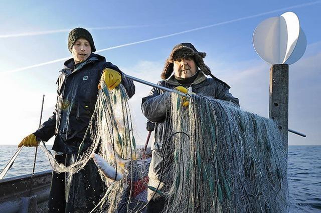 Bodenseefischer fordern mehr Phosphat