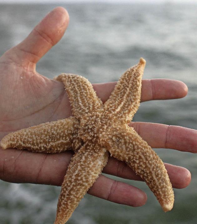 Geklonte Seesterne leben länger.   | Foto: dpa