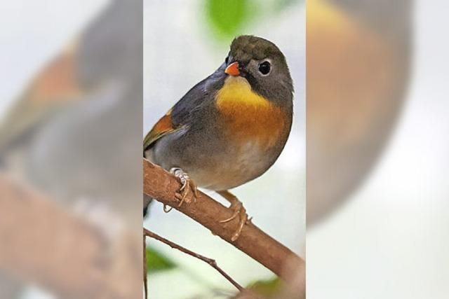 Sonnige und andere Vögel