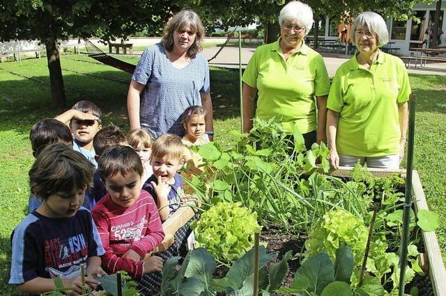 Gemüse für Kindergarten