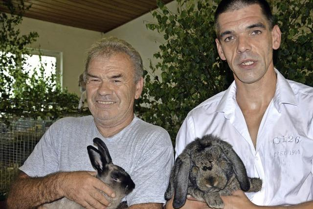 Fünf Kaninchen ohne Tadel