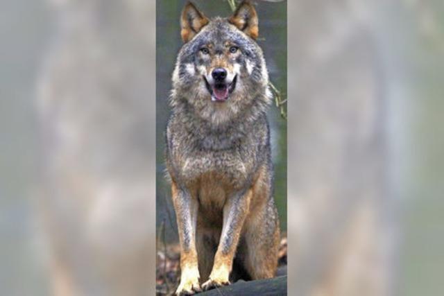 Es war ein Wolf