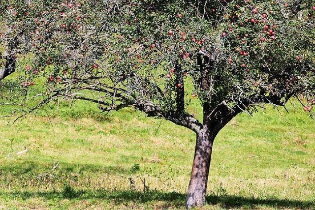 Betrunkener versteckt sich nach Unfall hinterm Baum