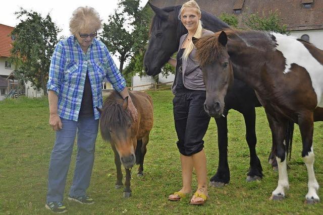 Alle Ponys finden ein neues Zuhause