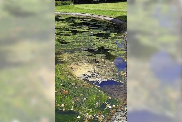 Vorerst keine Algen mehr - Wasser im Teich auf der Badmatte ist wieder klar