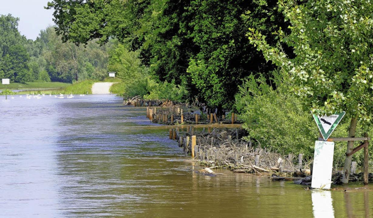 Schon bei geringem Hochwasser des Leop...rd derzeit die obere Bresche geflutet.  | Foto: Gollrad