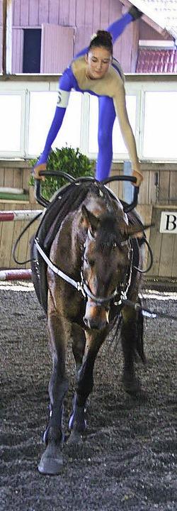 Johnny, das neue Pferd beim Reitverein Oberes Elztal.   | Foto: K.Heiss