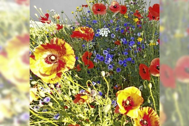 BLÜTENLESE: Blumenfleck