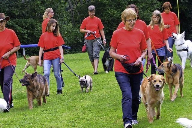 Hundefreunde Bonndorf zeigen Einblicke in die Arbeit mit ihren Tieren