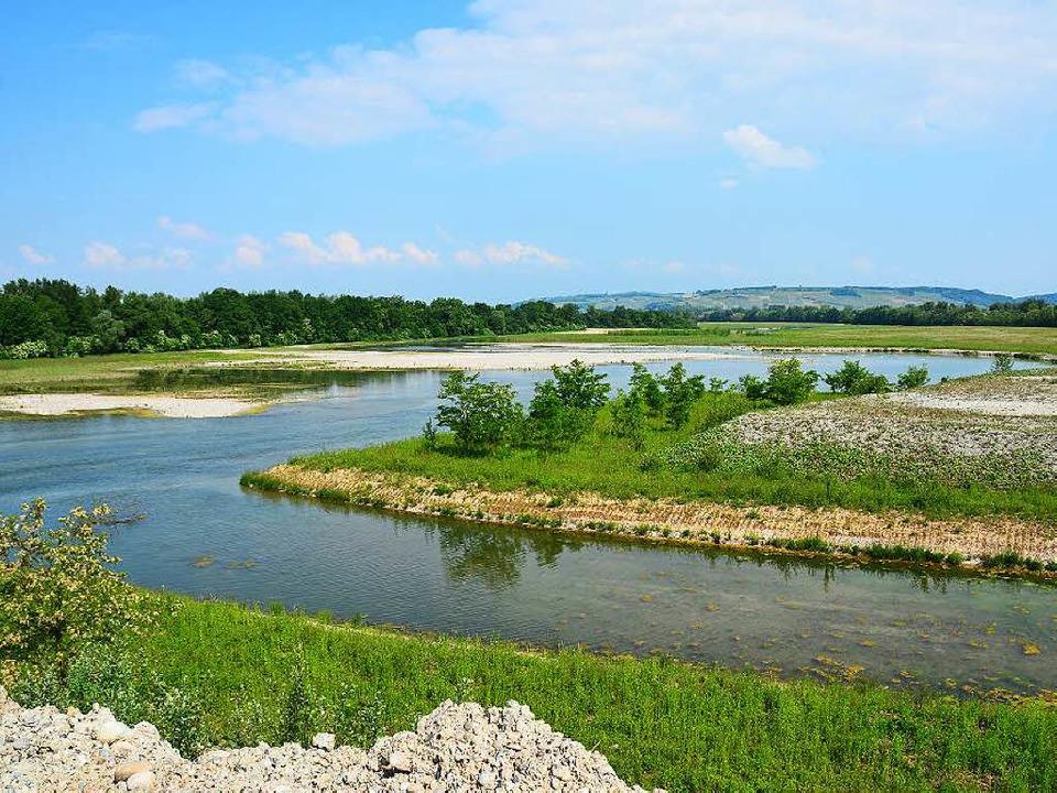 Die Rheininsel hat sich wieder in eine langsam grünende Fläche verwandelt.   | Foto: Annette Mahro