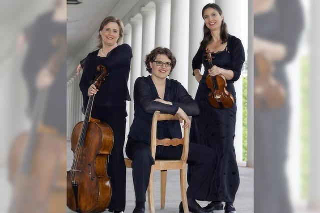 Taubengurren mischt sich in die Mozart-Klänge