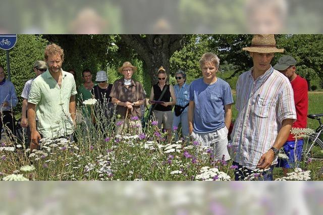 Ein Garten für Bienen und Vögel