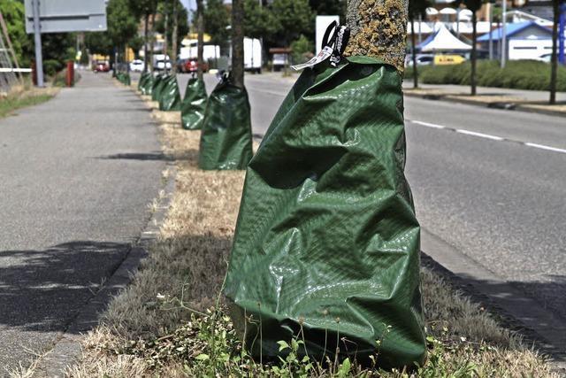 Effiziente Bewässerung junger Bäume