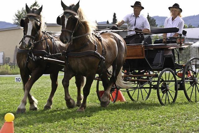 Pferdesport in Bahlingen