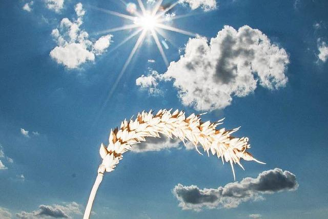 Südbaden leidet unter einer ungewöhnlichen Trockenheit