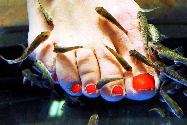 Gericht erlaubt Einsatz von Fischen zur Fußpflege