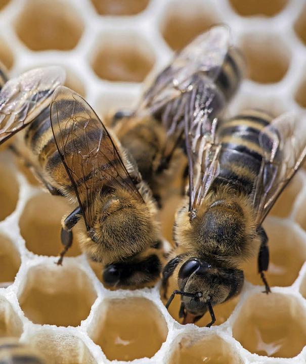Bienen bei der Arbeit   | Foto: Adelbert Mutz/dpa