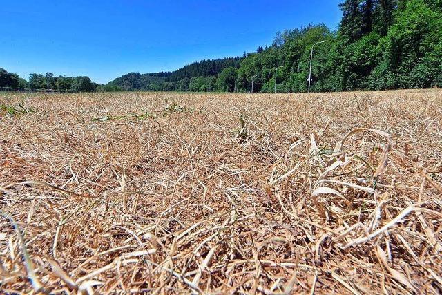 Ein Funke genügt: Waldbrandgefahr im Freiburger Forst