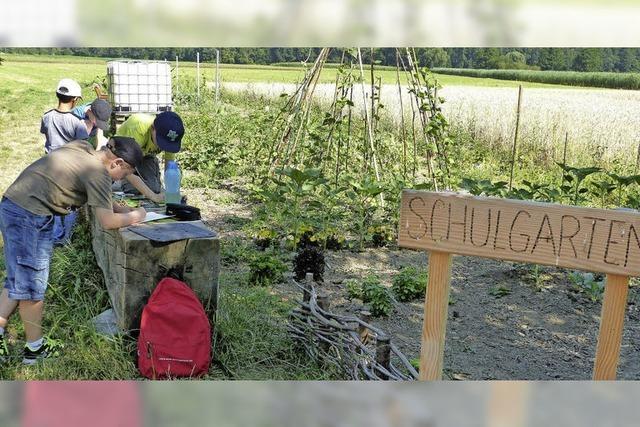 Schulunterricht in Feld, Wald und Wiesen