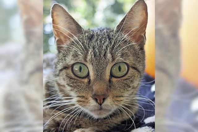 Stolze Katzenmutti