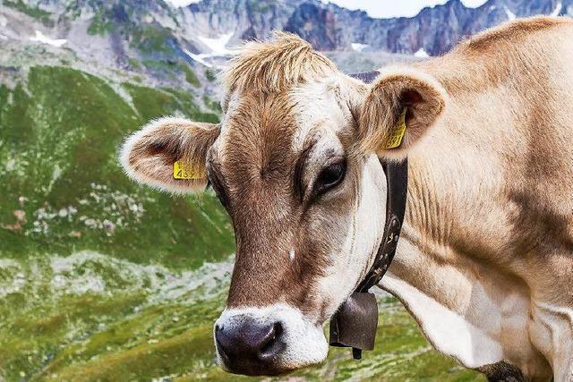 Tierschützerin will Schweizer Kühe von ihren Glocken befreien