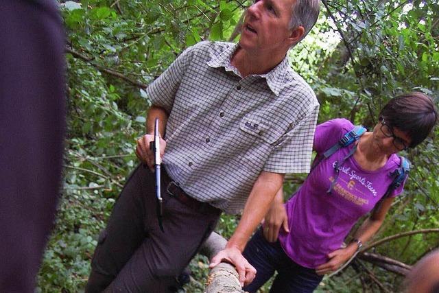 Im Meißenheimer Wald: So zeigt sich Eschensterben