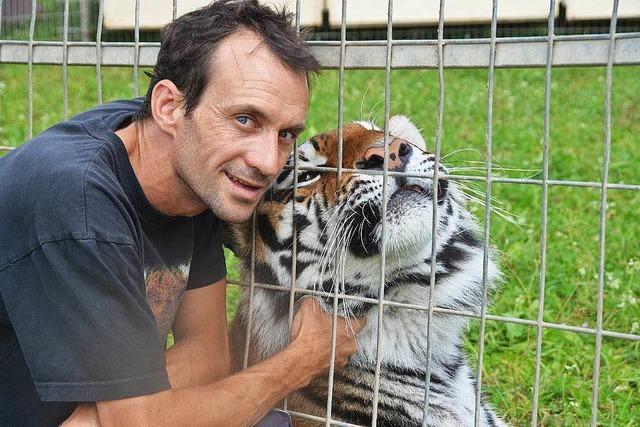 Brauchen Christian Wallisers Tiger in Löffingen mehr Platz?
