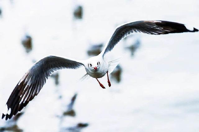 Wütende Vögel: Wenn Möwen Menschen angreifen