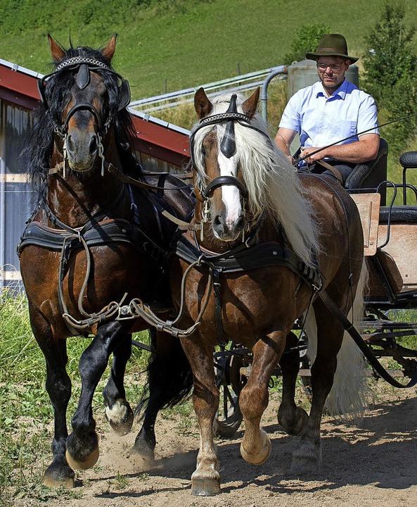 Beeindruckendes Bild: Die Leistungshen...Markward und Leonhard vor der Kutsche.  | Foto: Wolfgang Scheu