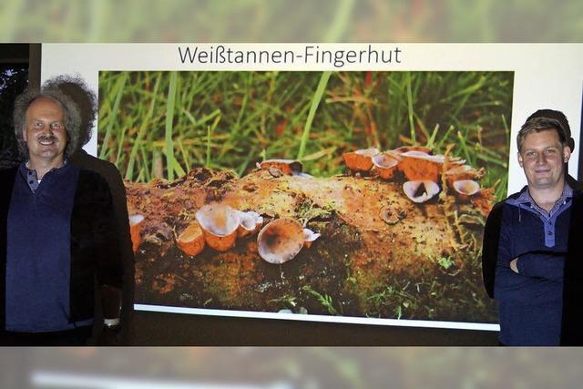 Seltene Pilze im Sulzbachtal