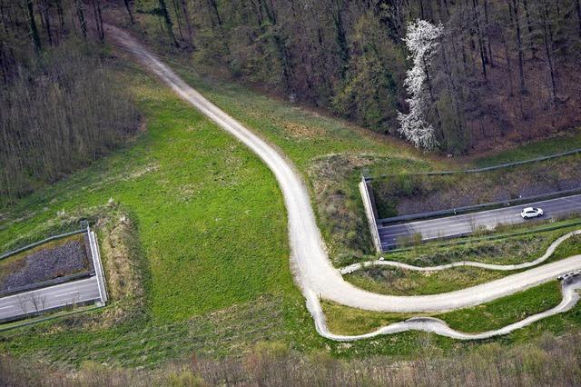 Neue Wanderwege für Luchs, Lurch & Co.