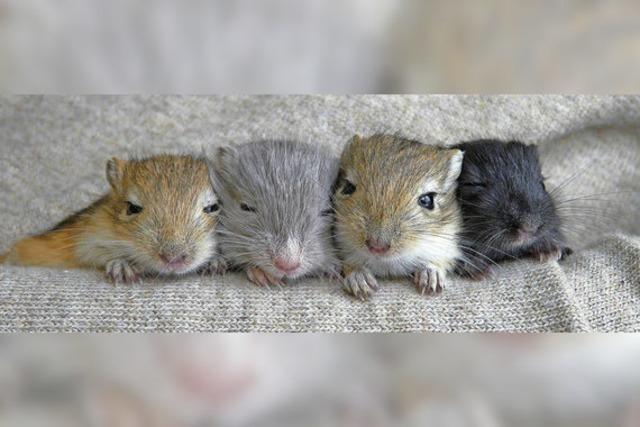 Die Mäuschen sind einfach so herzig