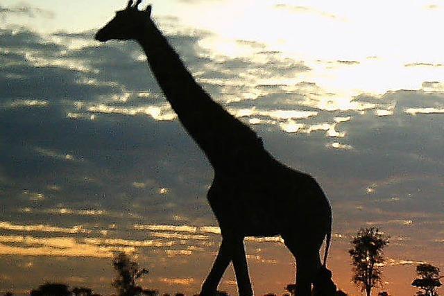 Großwildjägerin rechtfertigt tote Giraffe