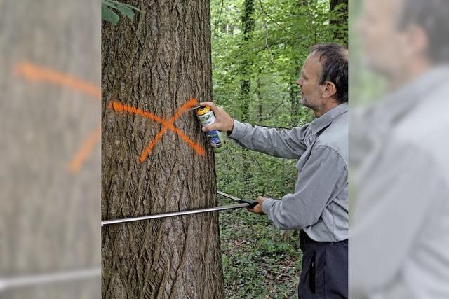 Mit Spraydose und Kluppe im Wald